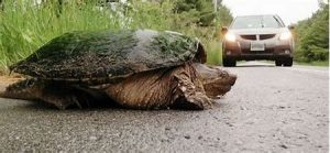 Watch out for turtles!